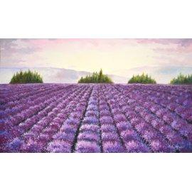 Campos de Lavanda en flor