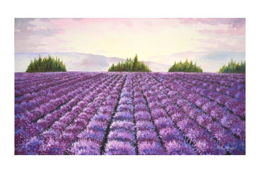 campo de lavanda en flor